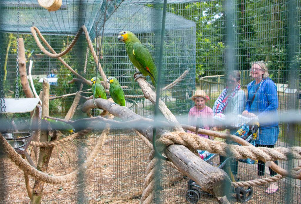 Amazona Zoo Parrots